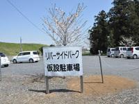 桜リバーサイドパーク1
