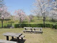 桜リバーサイドパーク3