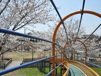 桜リバーサイドパーク5