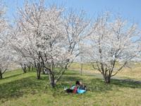 桜リバーサイドパーク6